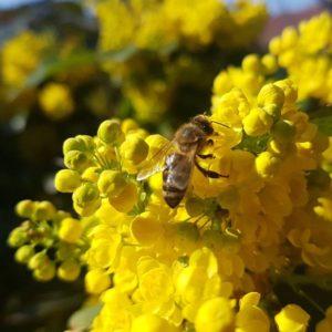 Vedjuk a méheket