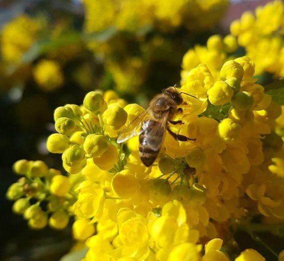 Jövő méhek nélkül? Inkább tegyünk értük, virágos kertekre fel!